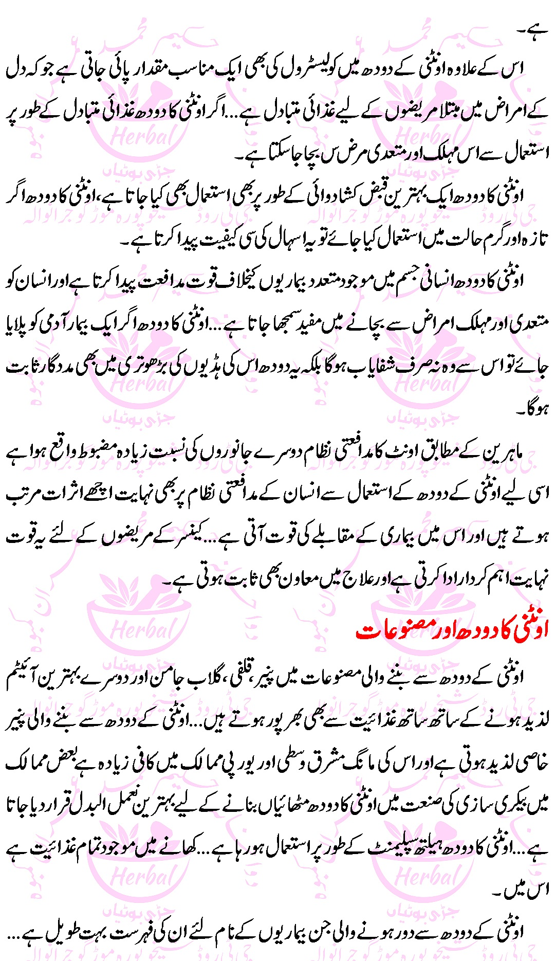 Oontni Kay Doodh kay Faiday (Camel Milk Benefits) in Urdu 3