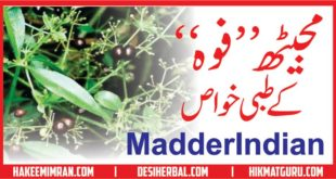 Majeeth (Madder indian) Benefits in urdu مجیٹھ کے طبعی خواص
