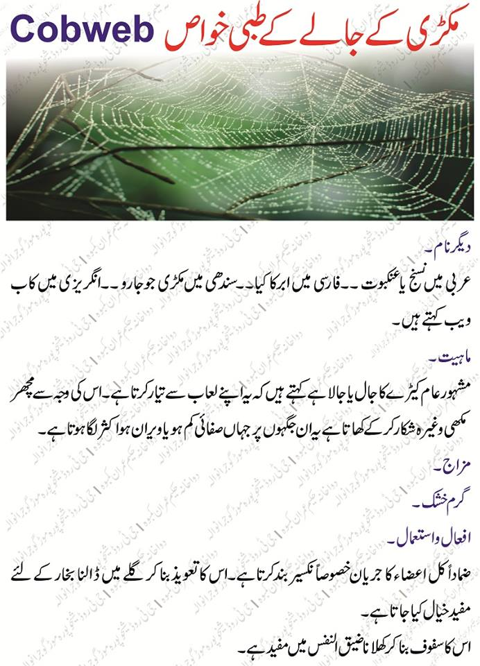 Makree Ka Jala(Cobweb) Benefits in urdu