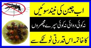 Home Remedies for Keep Mosquito Far Away (Machhar Door Bhagane Ke Gharelu Totkay)