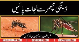 Machar Ky Katney (Mosquito Bites) Sy Hifazat Ka Totka