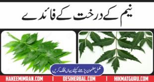 Neem K Faide In Urdu