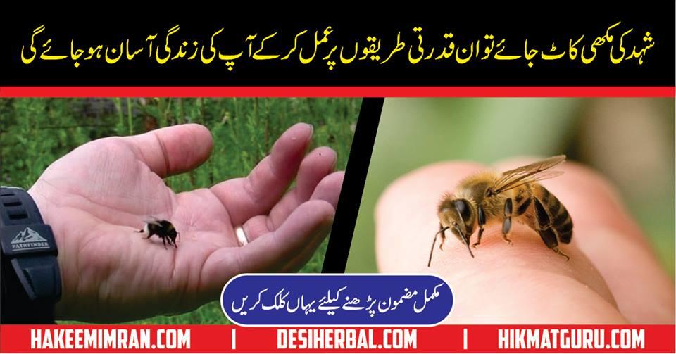 Shehed ki Makhi ka Katna Ka Ilaj Urdu Home Tips for Bee Sting