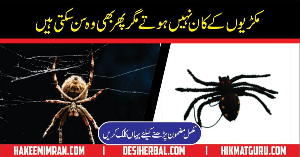 Spider Information In Urdu Makdi Ka Jala