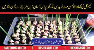How To Grow Garlic At Home in urdu Lehsun Ghar Main Ugana