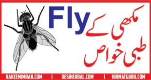 Makhee (Fly) Kay Tibbi Benefits