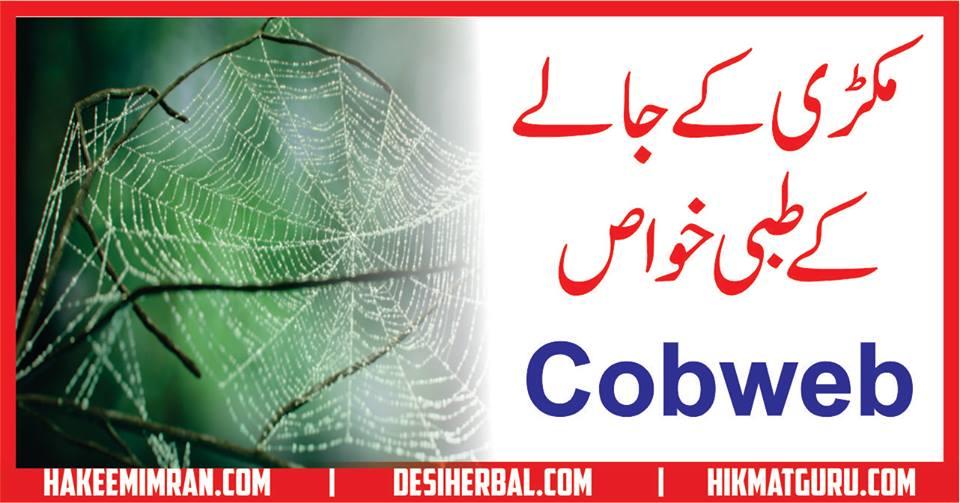 Makree Ka Jala(Cobweb) Benefits in urdu