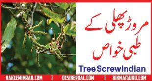 Maroor Phali(Tree Screw Indian) Kay Faiday مروڑ پھلی کے طبعی فائدے