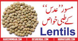 Masoor Adas (Lentils) Kay Tibbi Benefits مسور عدس کے طبعی فائدے