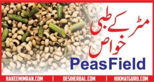 Matar (Peas Field) Benefits in urdu مٹر کے طبعی خواص