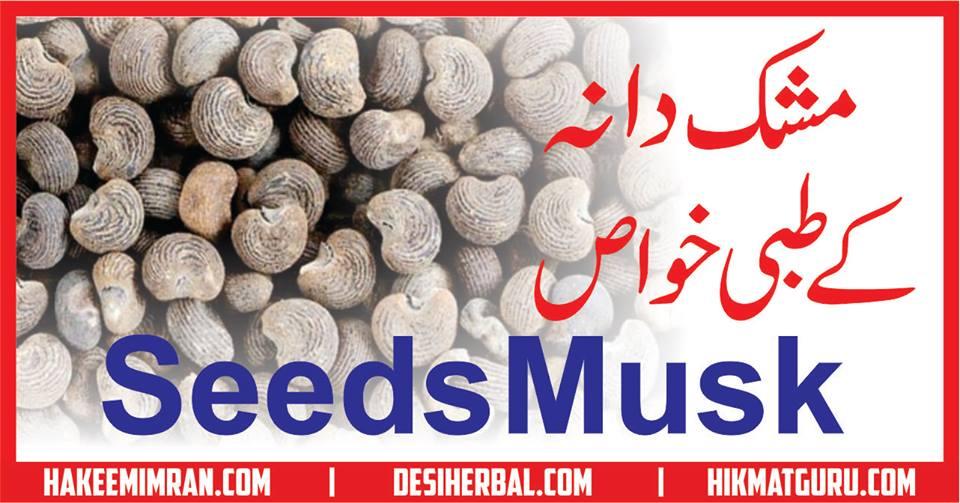 Mushk Dana (Seeds Musk) Benefits in urdu مشک دانی کے طبعی فائدے