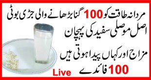 Mosli Safeed Benefits|10 Mardoon Ky Brabr Mardana Quwat|Mani Garhi|Timming By inteha